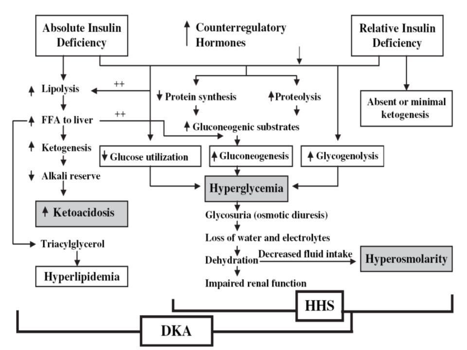 Estado Hiperosmolar Acontece más en paciente DM tipo 2. Los factores desencadenantes son parecidos a las cetoacidosis diabética. Se caracteriza por el