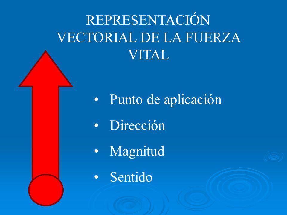 REPRESENTACIÓN VECTORIAL DE LA FUERZA VITAL Punto de aplicación Dirección Magnitud Sentido