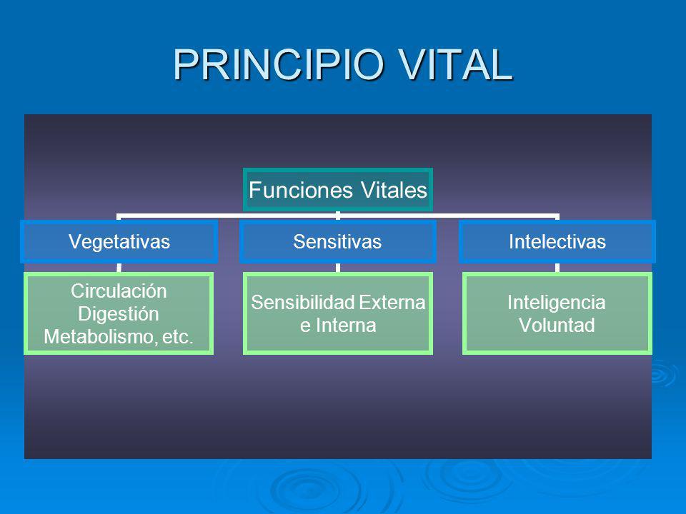 PRINCIPIO VITAL Funciones Vitales Vegetativas Circulación Digestión Metabolismo, etc. Sensitivas Sensibilidad Externa e Interna Intelectivas Inteligen