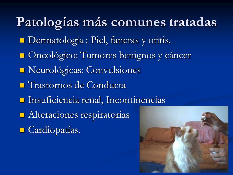 2009 Sobre un total de 86 pacientes … Sobre un total de 86 pacientes … Caninos 71 y Felinos 15 Machos 35 y Hembras 51 Patologías : 33 casos de piel 15 Tumores 2 Convulsiones 11 Conducta 4 Insuficiencia cardíaca 6 Digestivo 4 Aparato reproductor 3 Respiratorio.