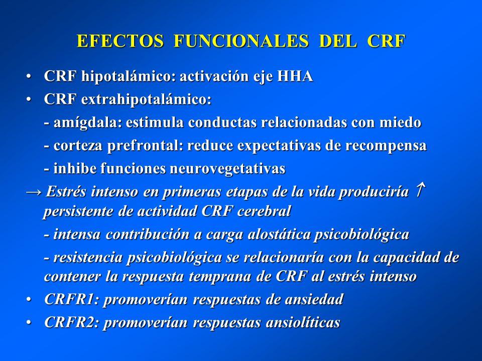 EFECTOS FUNCIONALES DEL CRF CRF hipotalámico: activación eje HHACRF hipotalámico: activación eje HHA CRF extrahipotalámico:CRF extrahipotalámico: - am