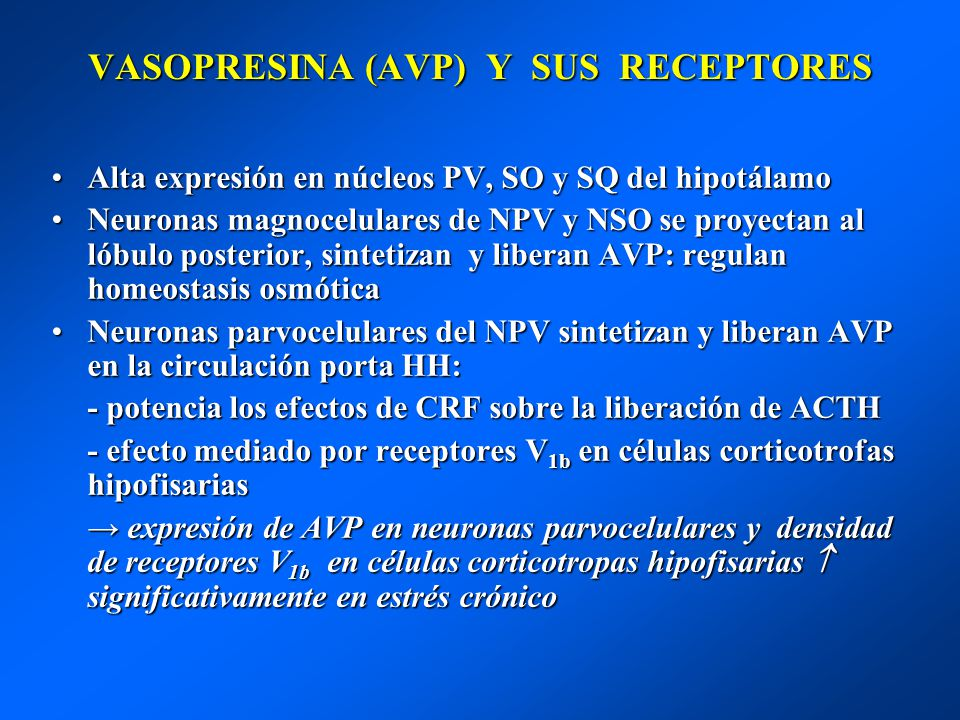 VASOPRESINA (AVP) Y SUS RECEPTORES Alta expresión en núcleos PV, SO y SQ del hipotálamoAlta expresión en núcleos PV, SO y SQ del hipotálamo Neuronas m