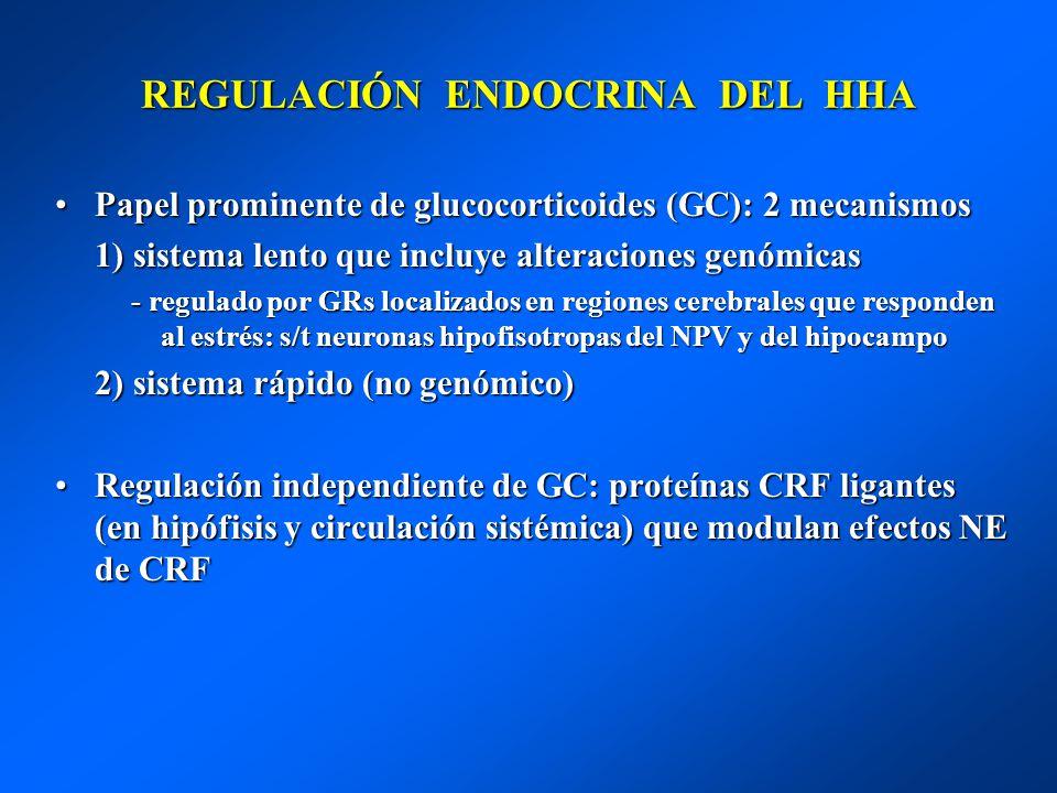 REGULACIÓN ENDOCRINA DEL HHA Papel prominente de glucocorticoides (GC): 2 mecanismosPapel prominente de glucocorticoides (GC): 2 mecanismos 1) sistema