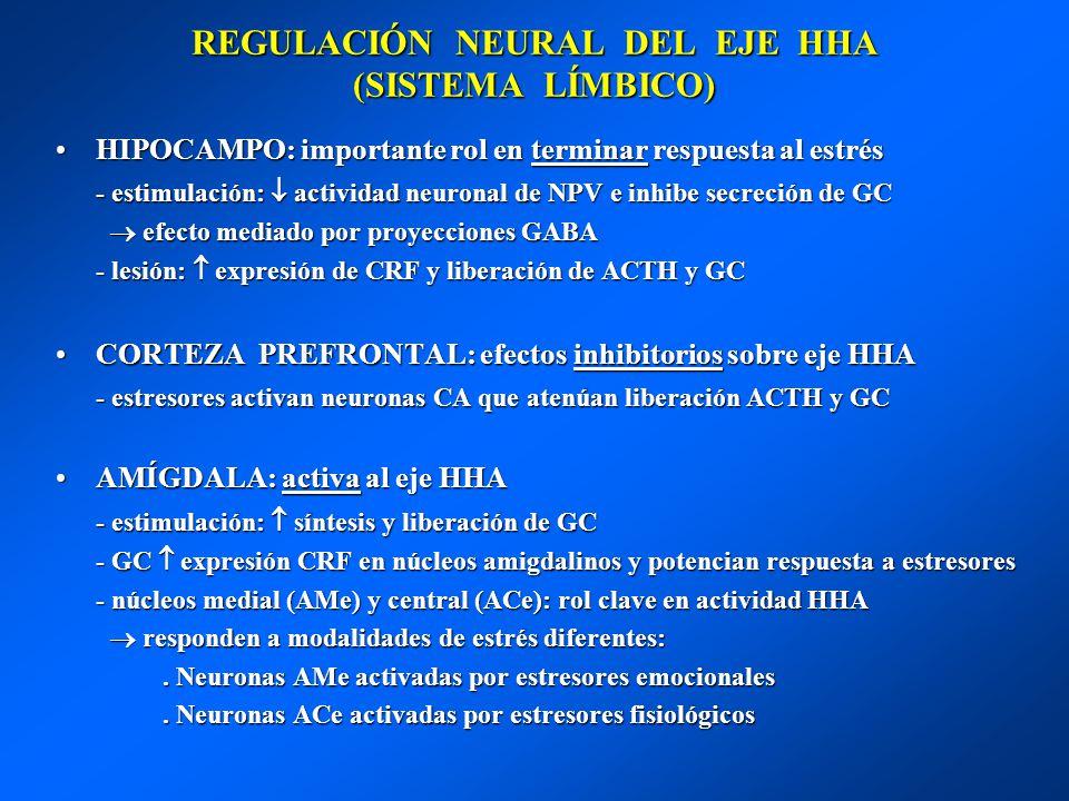 REGULACIÓN NEURAL DEL EJE HHA (SISTEMA LÍMBICO) HIPOCAMPO: importante rol en terminar respuesta al estrésHIPOCAMPO: importante rol en terminar respues