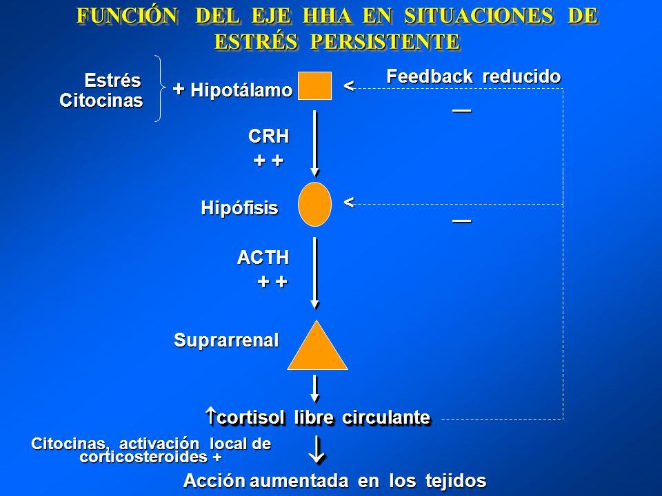 FUNCIÓN DEL EJE HHA EN SITUACIONES DE ESTRÉS PERSISTENTE + Hipotálamo CRH + + + + Hipófisis Hipófisis ACTH ACTH + + + + Suprarrenal Suprarrenal cortis