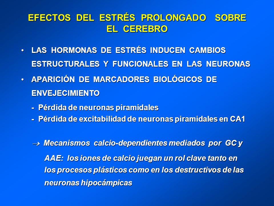 EFECTOS DEL ESTRÉS PROLONGADO SOBRE EL CEREBRO LAS HORMONAS DE ESTRÉS INDUCEN CAMBIOS ESTRUCTURALES Y FUNCIONALES EN LAS NEURONASLAS HORMONAS DE ESTRÉ