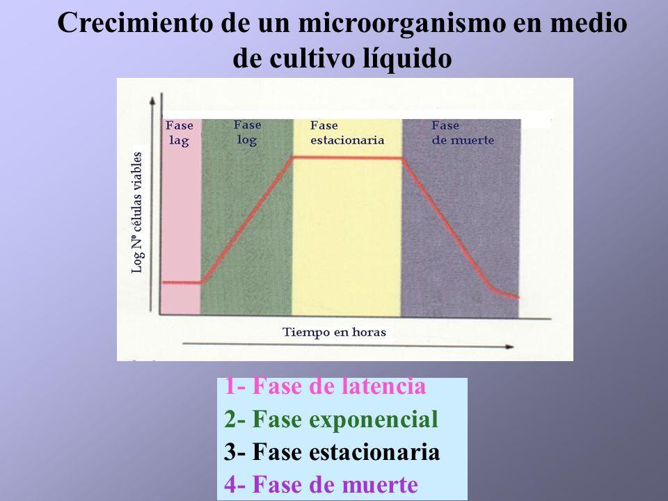 Crecimiento de un microorganismo en medio de cultivo líquido 1- Fase de latencia 2- Fase exponencial 3- Fase estacionaria 4- Fase de muerte