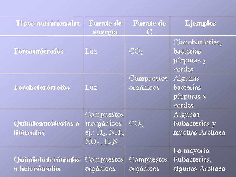 Condiciones para el crecimiento microbiano Nutrientes agua fuente de energía fuentes de C, N, otros elementos micronutrientes, factores de crecimiento Condiciones de cultivo temperatura pH luz aireación actividad de agua potencial redox Crecimiento Medios de cultivo