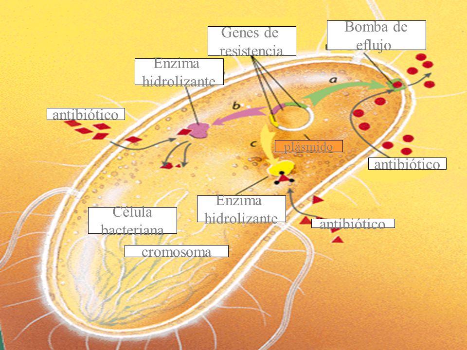 Genes de resistencia Bomba de eflujo antibiótico Enzima hidrolizante antibiótico plásmido Enzima hidrolizante cromosoma Célula bacteriana