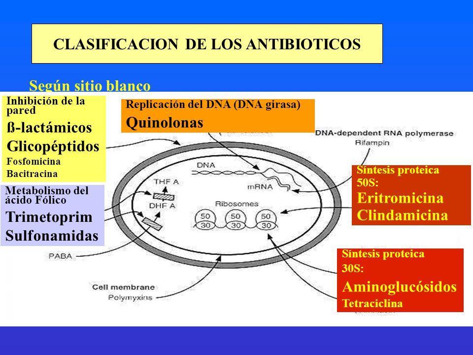 CLASIFICACION DE LOS ANTIBIOTICOS Según sitio blanco Inhibición de la pared ß-lactámicos Glicopéptidos Fosfomicina Bacitracina Metabolismo del ácido F