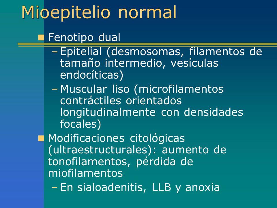 Mioepitelio normal Fenotipo dual –Epitelial (desmosomas, filamentos de tamaño intermedio, vesículas endocíticas) –Muscular liso (microfilamentos contr