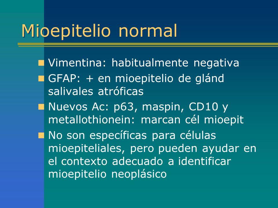 Mioepitelio normal Vimentina: habitualmente negativa GFAP: + en mioepitelio de glánd salivales atróficas Nuevos Ac: p63, maspin, CD10 y metallothionei