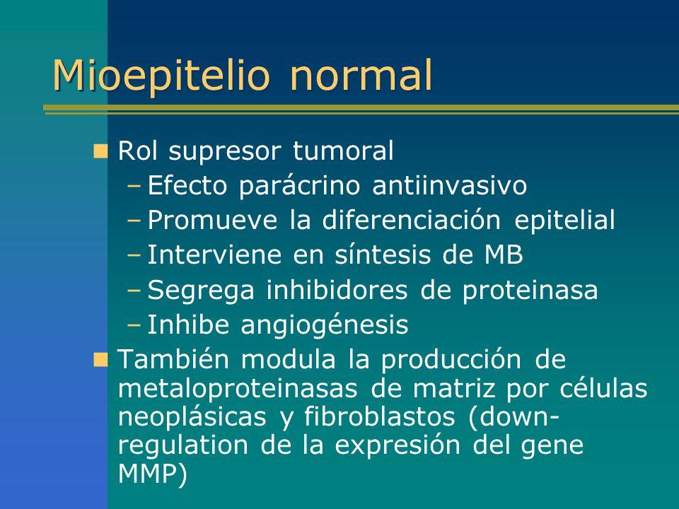 Mioepitelio normal Rol supresor tumoral –Efecto parácrino antiinvasivo –Promueve la diferenciación epitelial –Interviene en síntesis de MB –Segrega in