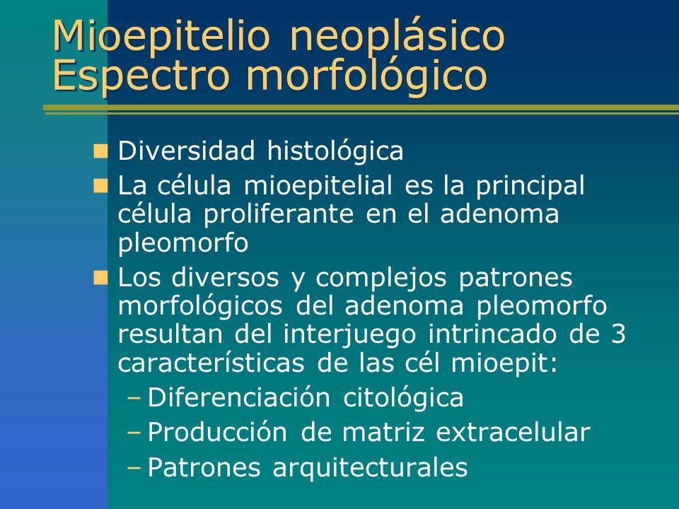 Mioepitelio neoplásico Espectro morfológico Diversidad histológica La célula mioepitelial es la principal célula proliferante en el adenoma pleomorfo