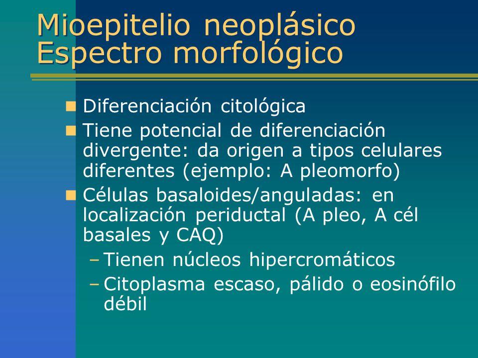 Mioepitelio neoplásico Espectro morfológico Diferenciación citológica Tiene potencial de diferenciación divergente: da origen a tipos celulares difere