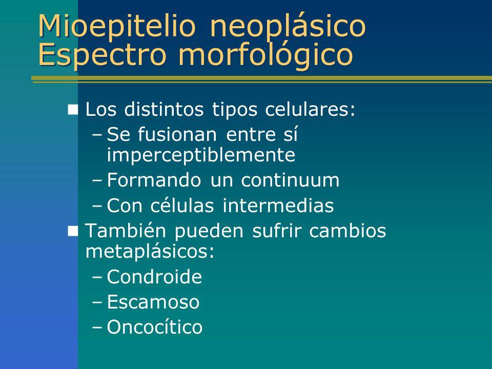 Mioepitelio neoplásico Espectro morfológico Los distintos tipos celulares: –Se fusionan entre sí imperceptiblemente –Formando un continuum –Con célula