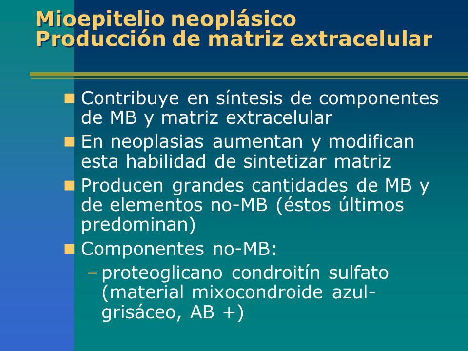 Mioepitelio neoplásico Producción de matriz extracelular Contribuye en síntesis de componentes de MB y matriz extracelular En neoplasias aumentan y mo