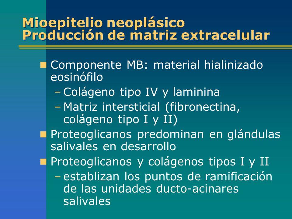 Mioepitelio neoplásico Producción de matriz extracelular Componente MB: material hialinizado eosinófilo –Colágeno tipo IV y laminina –Matriz interstic