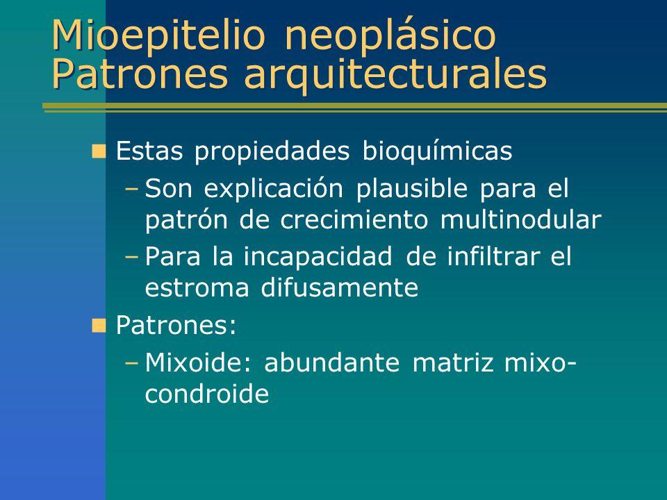 Mioepitelio neoplásico Patrones arquitecturales Estas propiedades bioquímicas –Son explicación plausible para el patrón de crecimiento multinodular –P