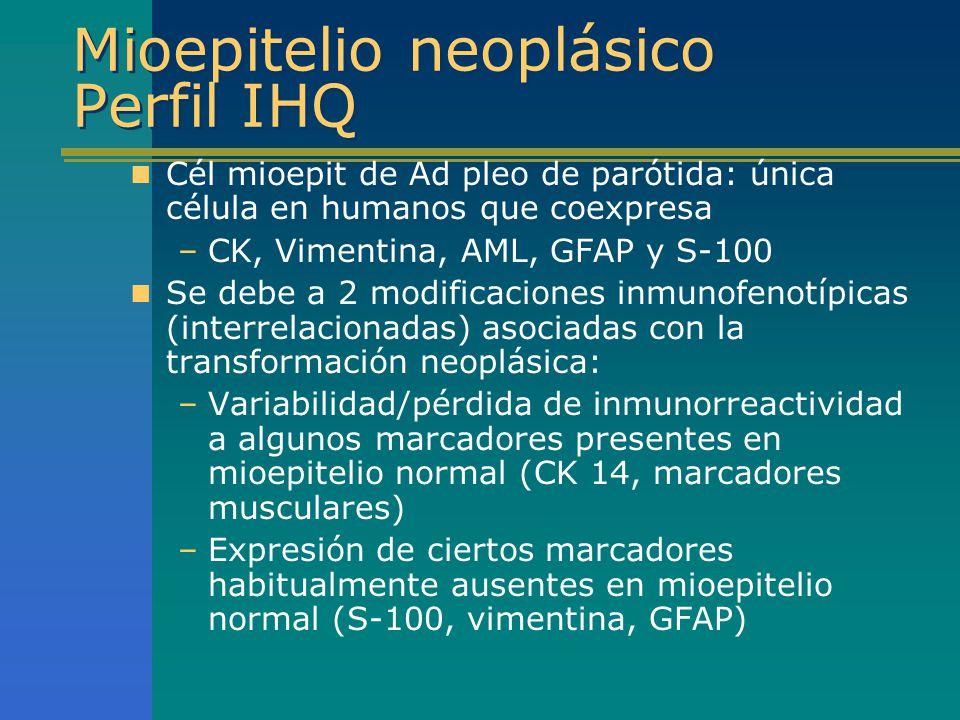 Mioepitelio neoplásico Perfil IHQ Cél mioepit de Ad pleo de parótida: única célula en humanos que coexpresa –CK, Vimentina, AML, GFAP y S-100 Se debe