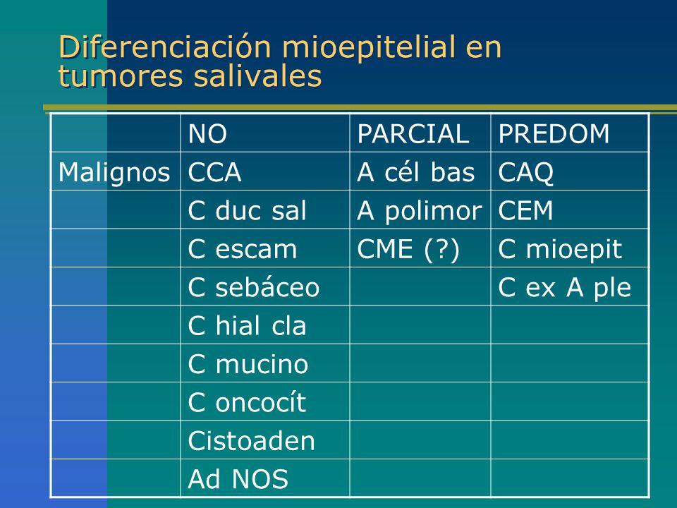 Diferenciación mioepitelial en tumores salivales NOPARCIALPREDOM MalignosCCAA cél basCAQ C duc salA polimorCEM C escamCME (?)C mioepit C sebáceoC ex A