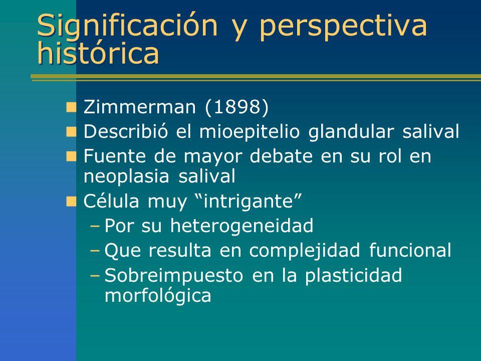 Significación y perspectiva histórica Zimmerman (1898) Describió el mioepitelio glandular salival Fuente de mayor debate en su rol en neoplasia saliva