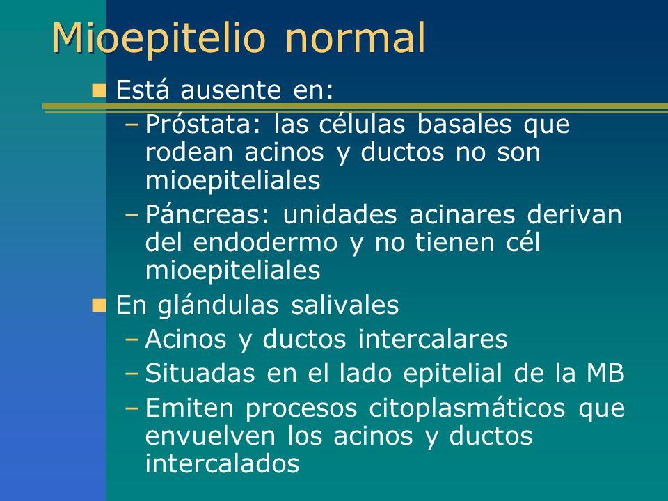Mioepitelio normal Está ausente en: –Próstata: las células basales que rodean acinos y ductos no son mioepiteliales –Páncreas: unidades acinares deriv