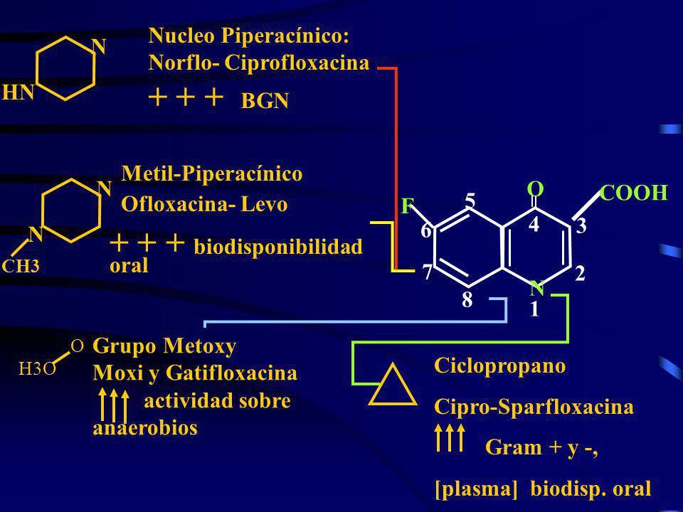 4 N 1N 1 O 2 3 5 6 7 8 COOH F N HN Nucleo Piperacínico: Norflo- Ciprofloxacina + + + BGN N N CH3 Metil-Piperacínico Ofloxacina- Levo + + + biodisponib