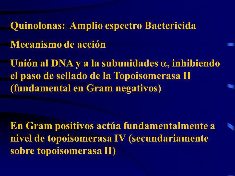 Quinolonas: Amplio espectro Bactericida Mecanismo de acción Unión al DNA y a la subunidades, inhibiendo el paso de sellado de la Topoisomerasa II (fun