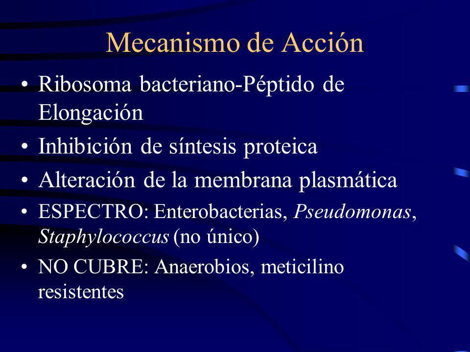 Mecanismo de Acción Ribosoma bacteriano-Péptido de Elongación Inhibición de síntesis proteica Alteración de la membrana plasmática ESPECTRO: Enterobac