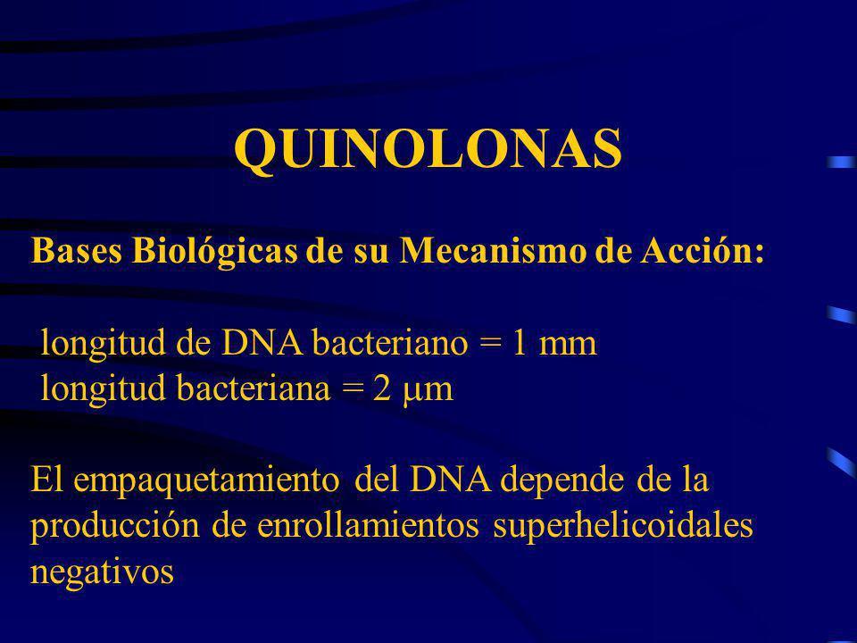 QUINOLONAS Bases Biológicas de su Mecanismo de Acción: longitud de DNA bacteriano = 1 mm longitud bacteriana = 2 m El empaquetamiento del DNA depende