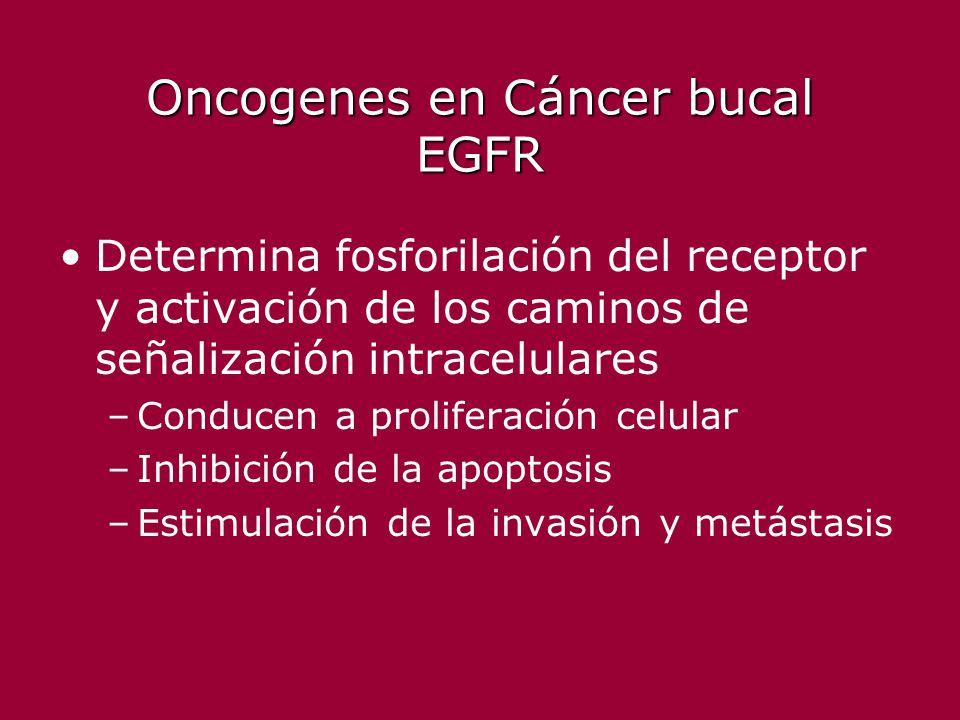 Oncogenes en Cáncer bucal EGFR Determina fosforilación del receptor y activación de los caminos de señalización intracelulares –Conducen a proliferaci