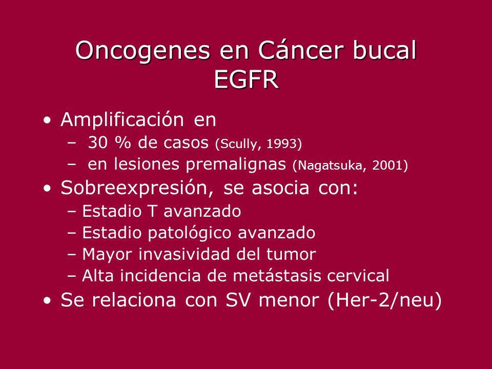 Oncogenes en Cáncer bucal EGFR Amplificación en – 30 % de casos (Scully, 1993) – en lesiones premalignas (Nagatsuka, 2001) Sobreexpresión, se asocia c