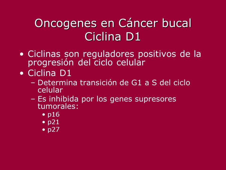 Oncogenes en Cáncer bucal Ciclina D1 Ciclinas son reguladores positivos de la progresión del ciclo celular Ciclina D1 –Determina transición de G1 a S