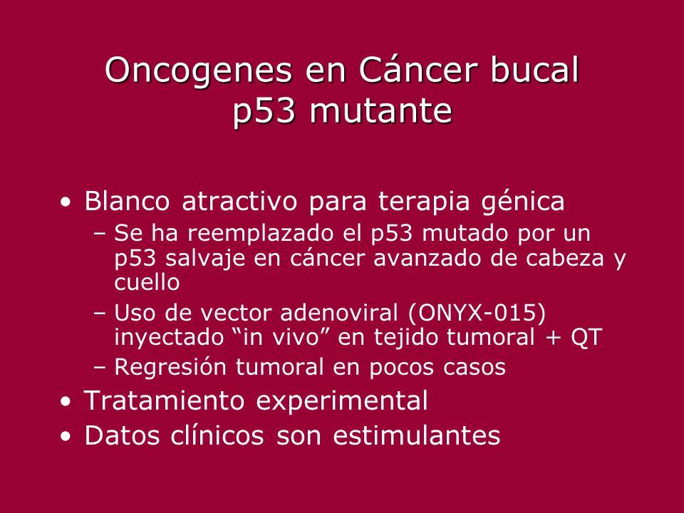 Oncogenes en Cáncer bucal p53 mutante Blanco atractivo para terapia génica –Se ha reemplazado el p53 mutado por un p53 salvaje en cáncer avanzado de c