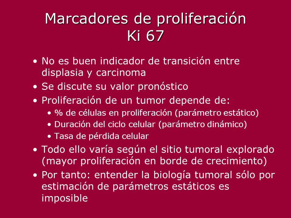 Marcadores de proliferación Ki 67 No es buen indicador de transición entre displasia y carcinoma Se discute su valor pronóstico Proliferación de un tu