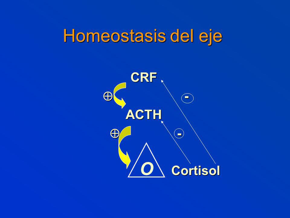 Homeostasis del eje CRF - -ACTH Cortisol Cortisol O