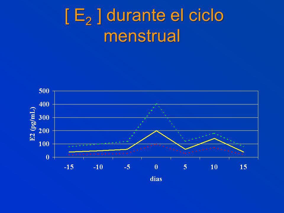 [ E 2 ] durante el ciclo menstrual