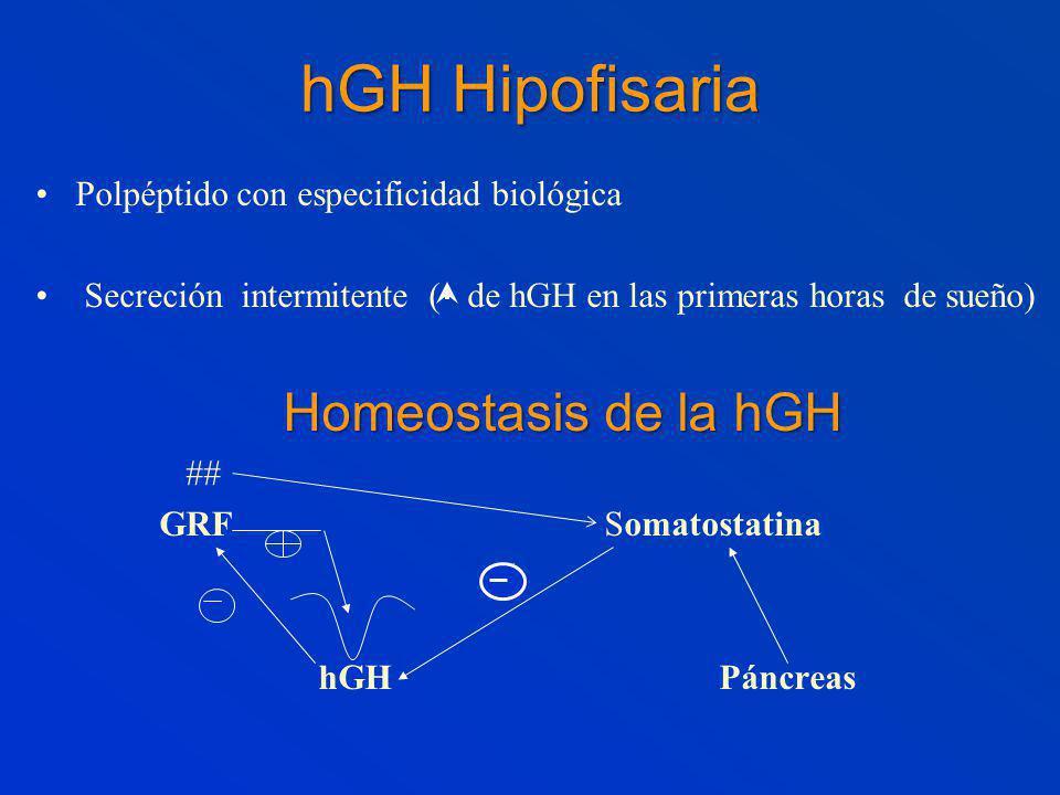 hGH Hipofisaria Polpéptido con especificidad biológica Secreción intermitente ( de hGH en las primeras horas de sueño) Homeostasis de la hGH ## GRF Somatostatina ( hGH Páncreas