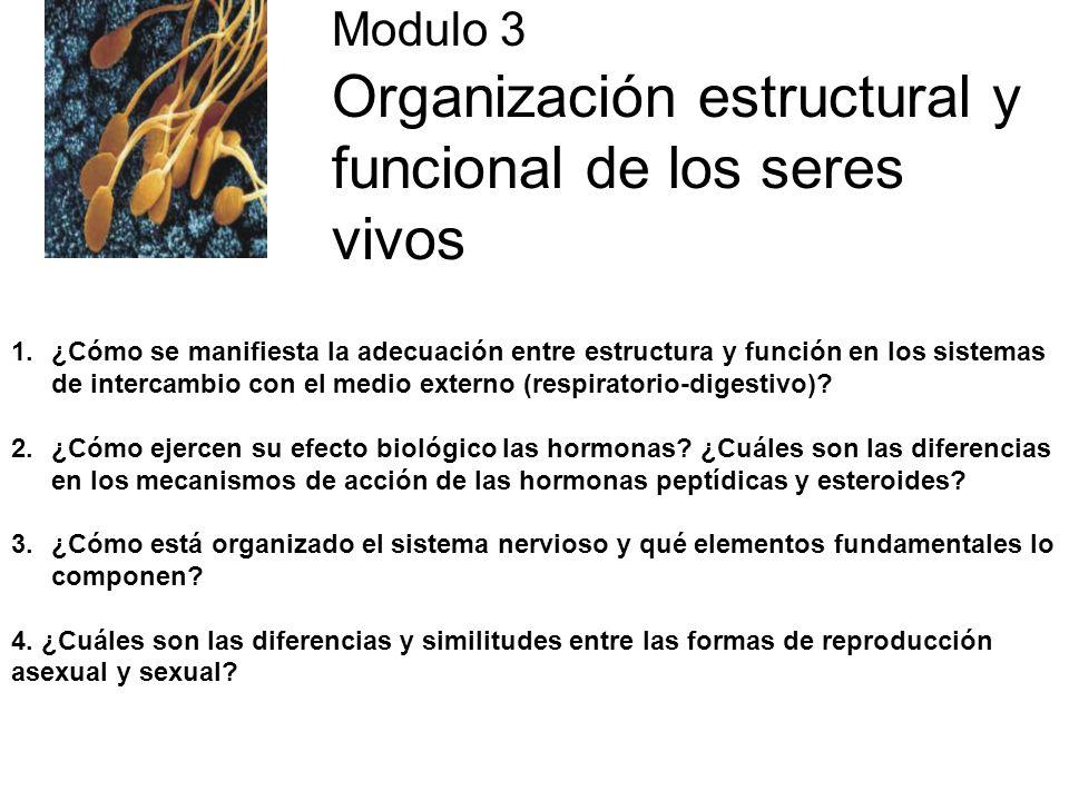 Modulo 3 Organización estructural y funcional de los seres vivos 1.¿Cómo se manifiesta la adecuación entre estructura y función en los sistemas de intercambio con el medio externo (respiratorio-digestivo).