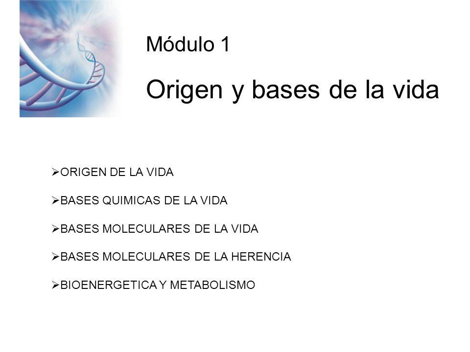 Módulo 1 Origen y bases de la vida ORIGEN DE LA VIDA BASES QUIMICAS DE LA VIDA BASES MOLECULARES DE LA VIDA BASES MOLECULARES DE LA HERENCIA BIOENERGETICA Y METABOLISMO