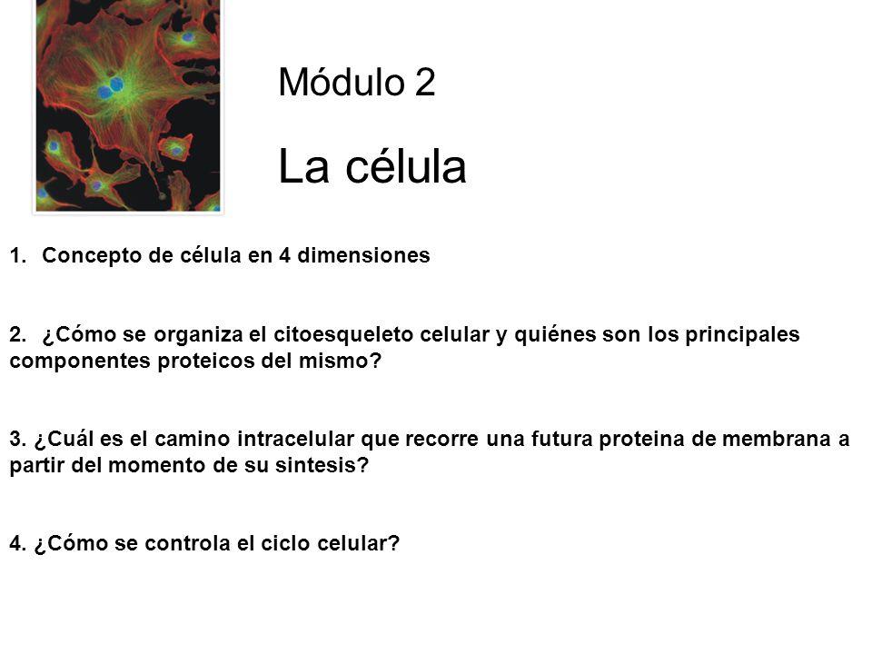 Módulo 2 La célula 1.Concepto de célula en 4 dimensiones 2.¿Cómo se organiza el citoesqueleto celular y quiénes son los principales componentes proteicos del mismo.