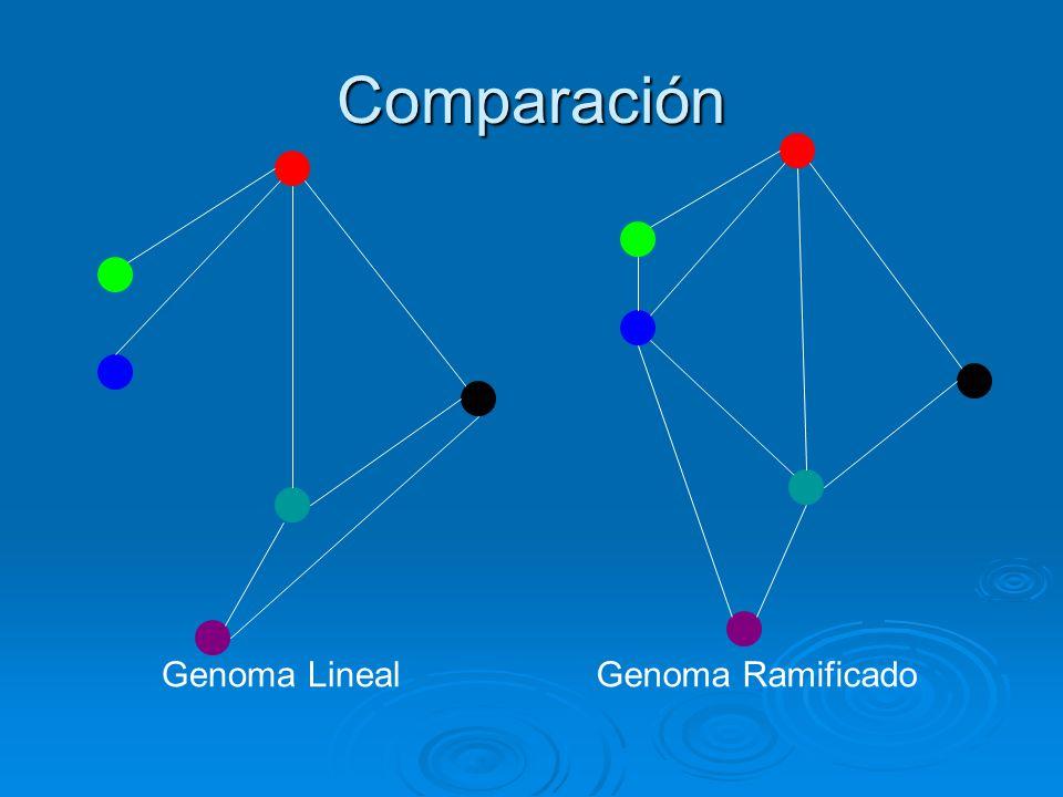 Comparación Genoma LinealGenoma Ramificado