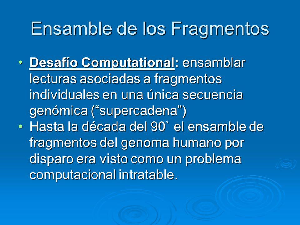 Ensamble de los Fragmentos Desafío Computational: ensamblar lecturas asociadas a fragmentos individuales en una única secuencia genómica (supercadena)