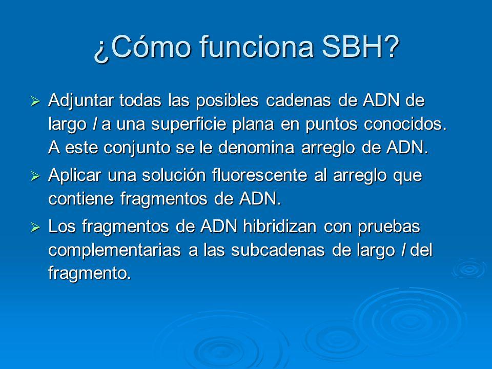 ¿Cómo funciona SBH? Adjuntar todas las posibles cadenas de ADN de largo l a una superficie plana en puntos conocidos. A este conjunto se le denomina a