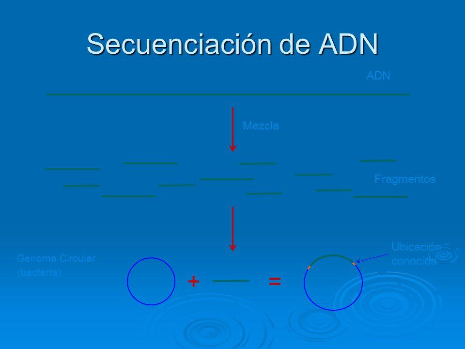 Secuenciación de ADN += ADN Mezcla Fragmentos Genoma Circular (bacteria ) Ubicación conocida