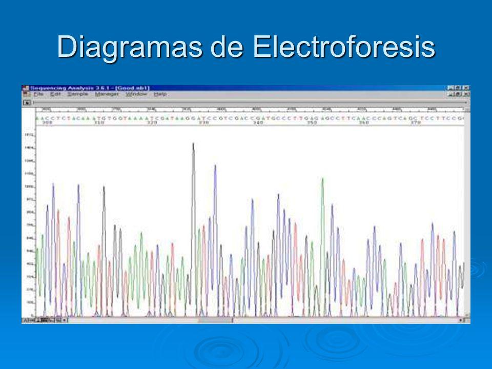 Diagramas de Electroforesis