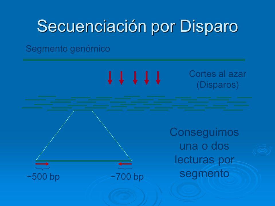 Secuenciación por Disparo Cortes al azar (Disparos) Segmento genómico Conseguimos una o dos lecturas por segmento ~500 bp~700 bp