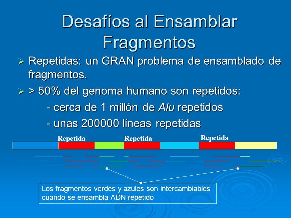Desafíos al Ensamblar Fragmentos Repetidas: un GRAN problema de ensamblado de fragmentos. Repetidas: un GRAN problema de ensamblado de fragmentos. > 5