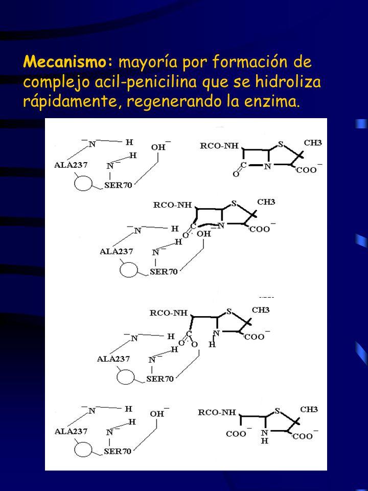 Mecanismo: mayoría por formación de complejo acil-penicilina que se hidroliza rápidamente, regenerando la enzima.
